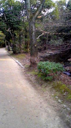 紅葉渓界隈1