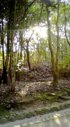 紅葉渓界隈2