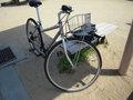 Cycling08040609